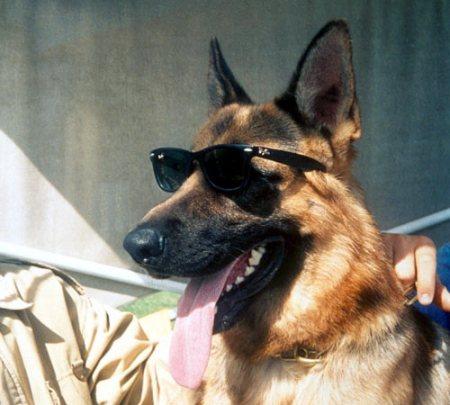 Gunther, Richest Dog in the World!